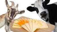 Tenerife-Connect kaas geit koe melk traditie artisanaal vee boerderij