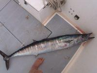 Tenerife-Connect vis vissen zeevissen sportvissen hengelen