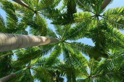 Tenerife-Connect palmetum palmbomen stort vuilnis berg Santa-Cruz