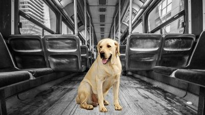 Tenerife-Connect huisdier hond kat bus verboden