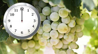 Tenerife-Connect druif druiven nuevo-feliz-año Gelukkig-nieuwjaar traditie uvas