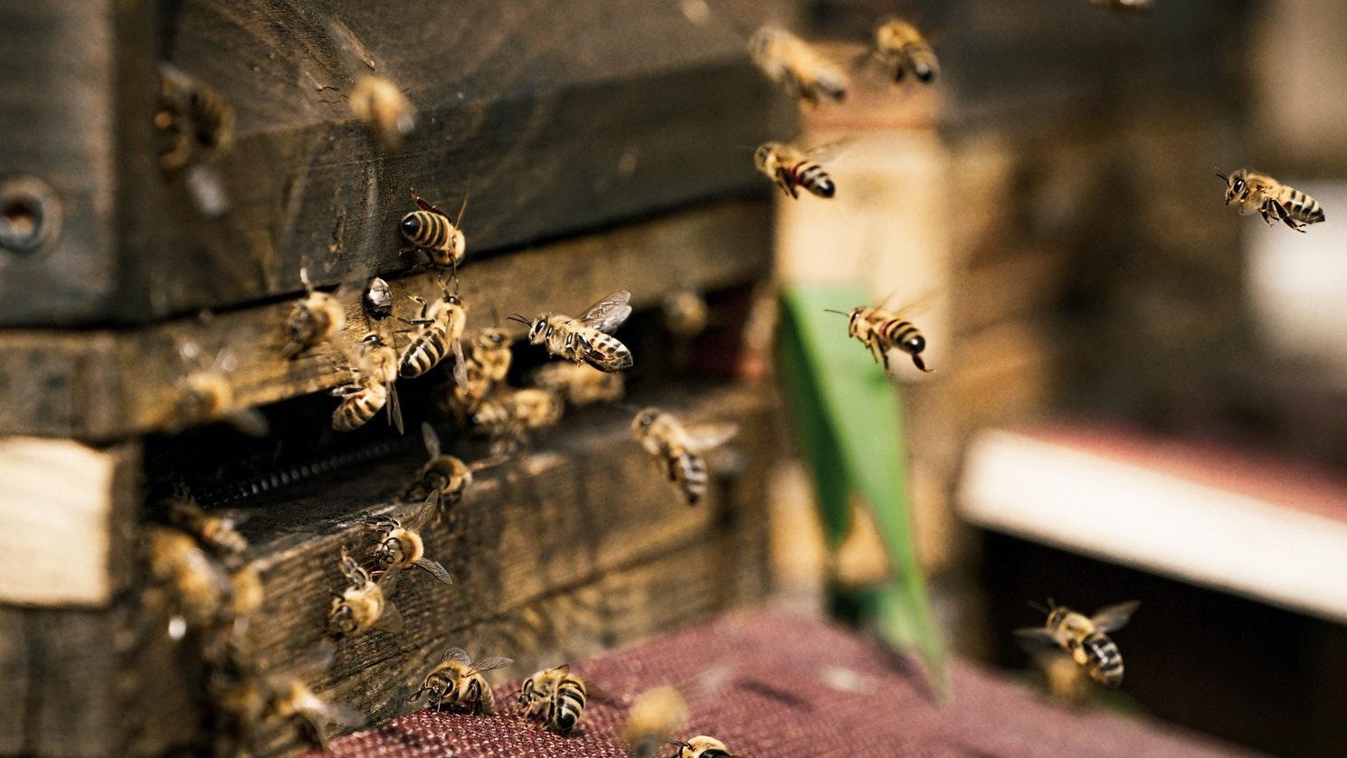 Tenerife-Connect honing honig bijen