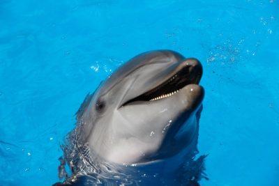 Tenerife-Connect dolfijn walvis excursie uitstap, attractie boot zee oceaan