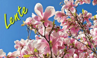 Tenerife-Connect lente-op-het-eiland zomer fenomeen klimaat lente weer zomer