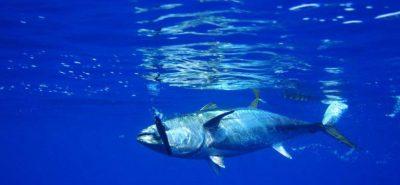 Tenerife-Connect tonijn vis visvangst traditie gastronomie